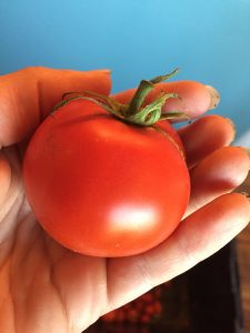 A perfect-looking tomato
