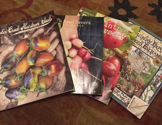 A spread of seed catalogs